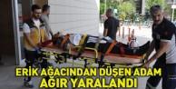 Erik Ağacından Düşen Yaşlı Adam Ağır Yaralandı