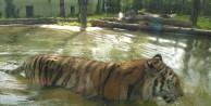 Hayvanat bahçesine ziyaretçi akını