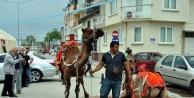 Manavgat'ın develeri Mudanya turunda