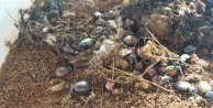 Terminatör böcekler ormanlarda