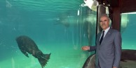 Bursa Zoo'nun yeni misafirleri fok ve penguen