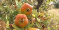 Bursa'nın dağlarına 1 milyon yabani meyveli orman ağacı dikildi
