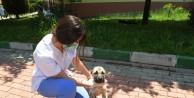 Köpeğin kulağını kestiler, belediye hayata döndürdü