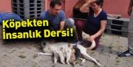 Köpekten İnsanlık Dersi! Köpek Yavru Kediyi Emzirdi, Annelik Yaptı