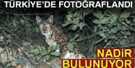 Türkiye'de fotoğraflandı