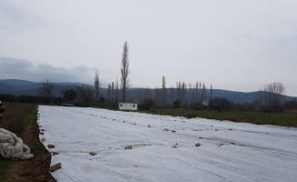 Havaların sıcak gitmesini fırsat bilen çiftçi fasulye ekti
