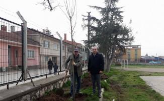 Veliler okul bahçesini ağaçlandırdı