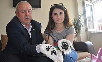 Bursa'da 'böcek istilası' iddiasıyla ilgili açıklama