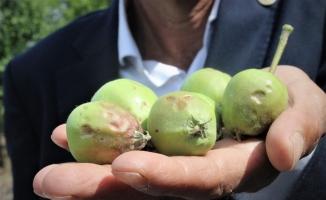 Bursa'da dolu binlerce dönüm meyve bahçesine zarar verdi