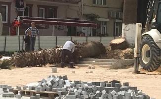 Mudanya'da kesilen ağaçlar ortalığı karıştırdı...