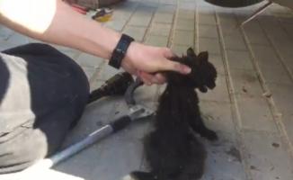 Otomobilin motoruna sıkışan kedi itfaiye ekipleri tarafından kurtarıldı
