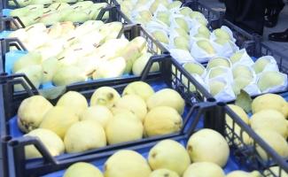 Tarım şehri Bursa'da meyvecilik güç kazanıyor