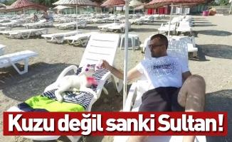 Kuzu değil sanki Sultan