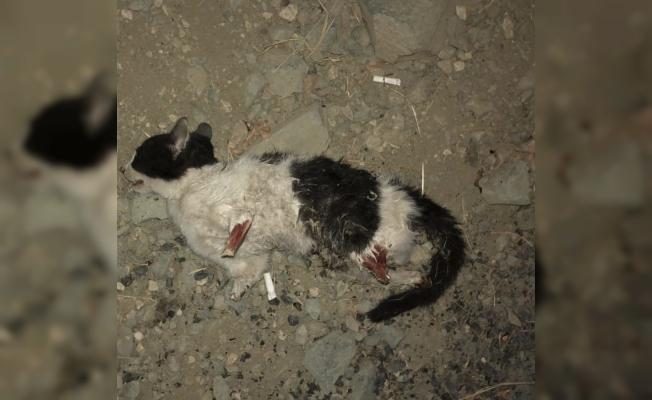 Vicdansızlar kedinin dört bacağını da kesti