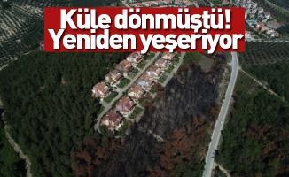 Bursa'da lüks villaların yanında küle dönen ormanlar yeniden yeşeriyor