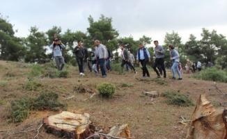 Ağaçların tıraşlanmasına köylülerden tepki