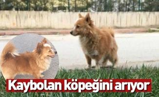 Kaybolan köpeğini arıyor