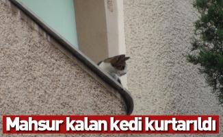 Mahsur kalan kedi kurtarıldı
