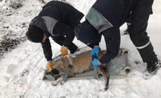 Donmak üzere olan köpekler kurtarıldı