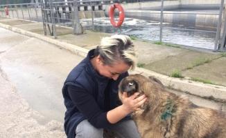 Maganda kurşunuyla yaralanan köpek sağlığına kavuştu