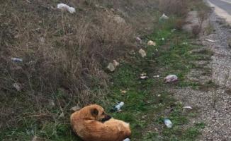 Yaralı Köpeğe İnegöl Belediyesi Sahip Çıktı