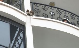 Bursa'da nefes kesen kedi kurtarma operasyonu