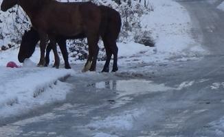 (Özel) Başı boş atlar sokak sokak yiyecek aradı