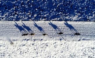 (Özel) Karlar altında dörtnala özgürlük havadan böyle görüntülendi...