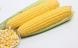 MAY Tohum tatlı mısır tohumuyla üreticinin gözdesi