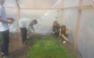 Okul bahçesinde organik tarım