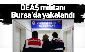 DEAŞ militanı Bursa'da yakalandı