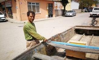 Yüzlerce arı firar etti