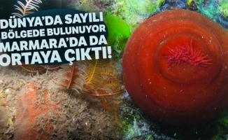Dünyada sayılı bölgede bulunuyor, Marmara'da da çıktı