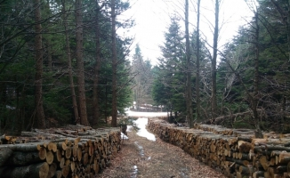 Uludağ'da yol bahanesiyle ağaç kesilmesine tepki