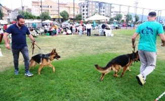 Farklı köpek ırkları Nilüfer'de buluştu