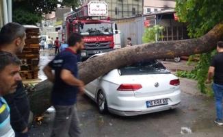 İnegöl'de Ağaç Otomobilin Üzerine Devrildi