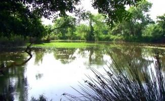 (Özel) Karacabey longozundan mangal sefası yasak
