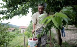 Türkiye'nin en kaliteli kirazını yetiştiriyorlar, tek şikayetleri para kazanamamak
