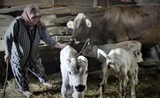 Yüzlerce yıldır hayvan bakılan köyde ilk defa böyle bir doğum gerçekleşti