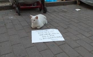(Özel) Dilenci kedi