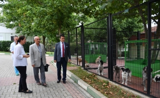 Prof. Dr. Aygül'den hayvan barınağına övgü