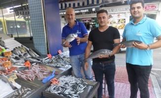 Mudanya'da balık fiyatları cep yakıyor