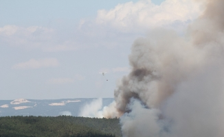 (Özel) 145 hektar orman kasıtlı yakılmış