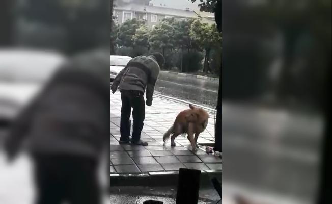 (Özel) Sağanak yağmurda köpeği yumrukladı