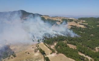 Aydın'da 2.5 hektar ormanlık alan yandı