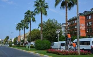 Büyükşehir'den kırmızı palmiye böceği mücadelesi