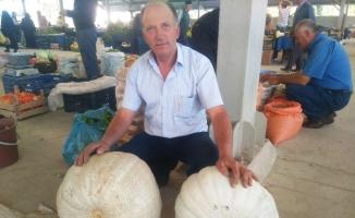 Dev bal kabaklarını satmakta zorlanıyor