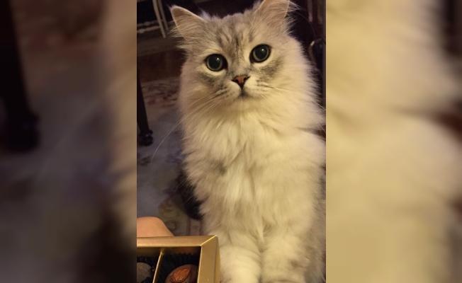 Dördüncü kattan düşerek kaybolan kedisini arıyor