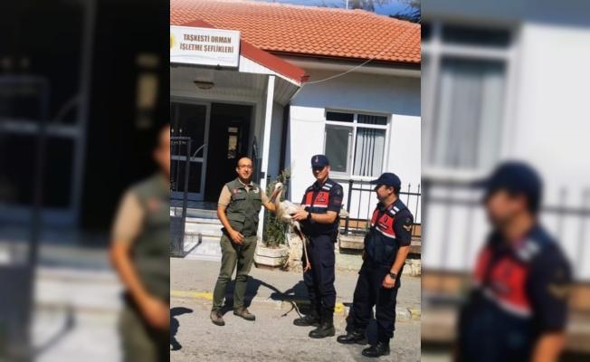 Jandarmanın bulduğu yaralı leylek tedavi altına alındı