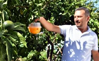 Sığacık'ta meyve ağaçlarına tuzaklı koruma
